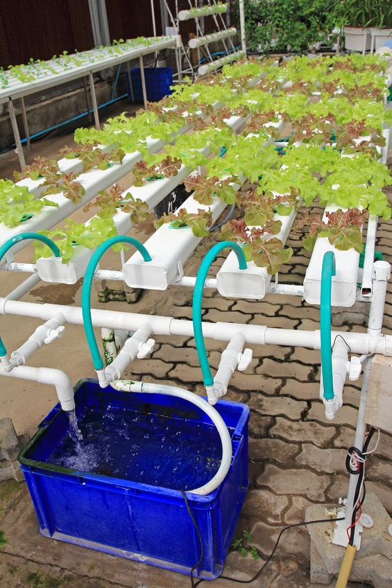Hydroponic vegetables with NTF technology